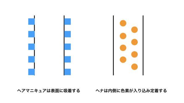 ヘナとヘアマニキュアの染まり方の違いを説明する画像